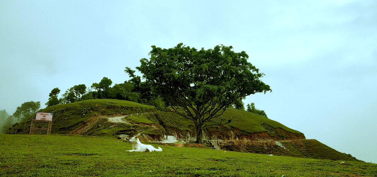 Lone Tree of Bahunthan